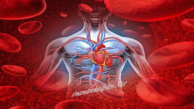 Kan Dolaşımı Doğal Yollarla Nasıl Artırılır? - inanankalpler.net