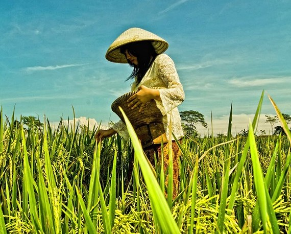Generasi Muda Sekarang Enggan Menjadi Seorang Petani