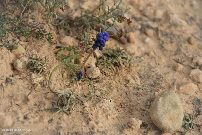 flores silvestres azul