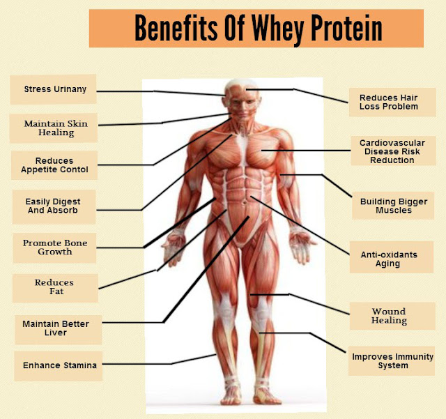 Benefits of a Higher Protein Diet