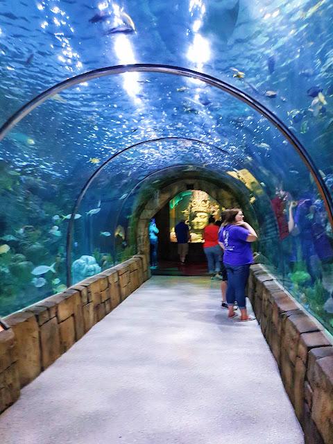 New Orleans, travel, US, tourist, aquarium, Louisiana, blogger, summer