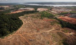 25 años y 1,3 millones de km2 de bosque perdidos