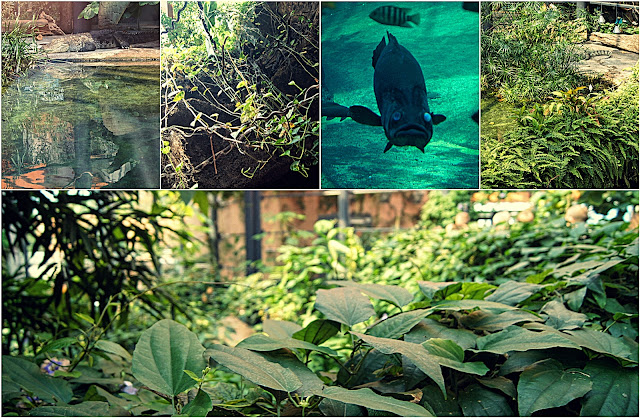 Kolaż zdjęć z Kotliny Konga [krokodyl, ryby i roślinność]