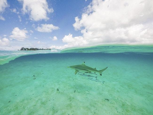 Lạc vào hòn đảo thiên đường nước trong, cát trắng, san hô rực rỡ sắc màu