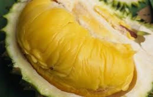 Buah durian terbesar di dunia