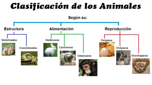 tipos de animales