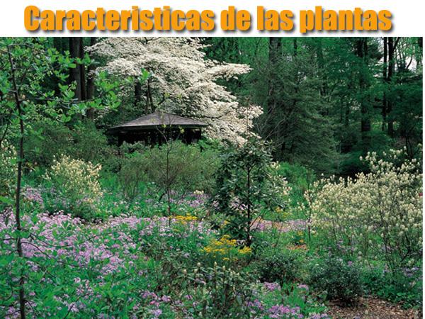 cuales son las caracteristicas de las plantas