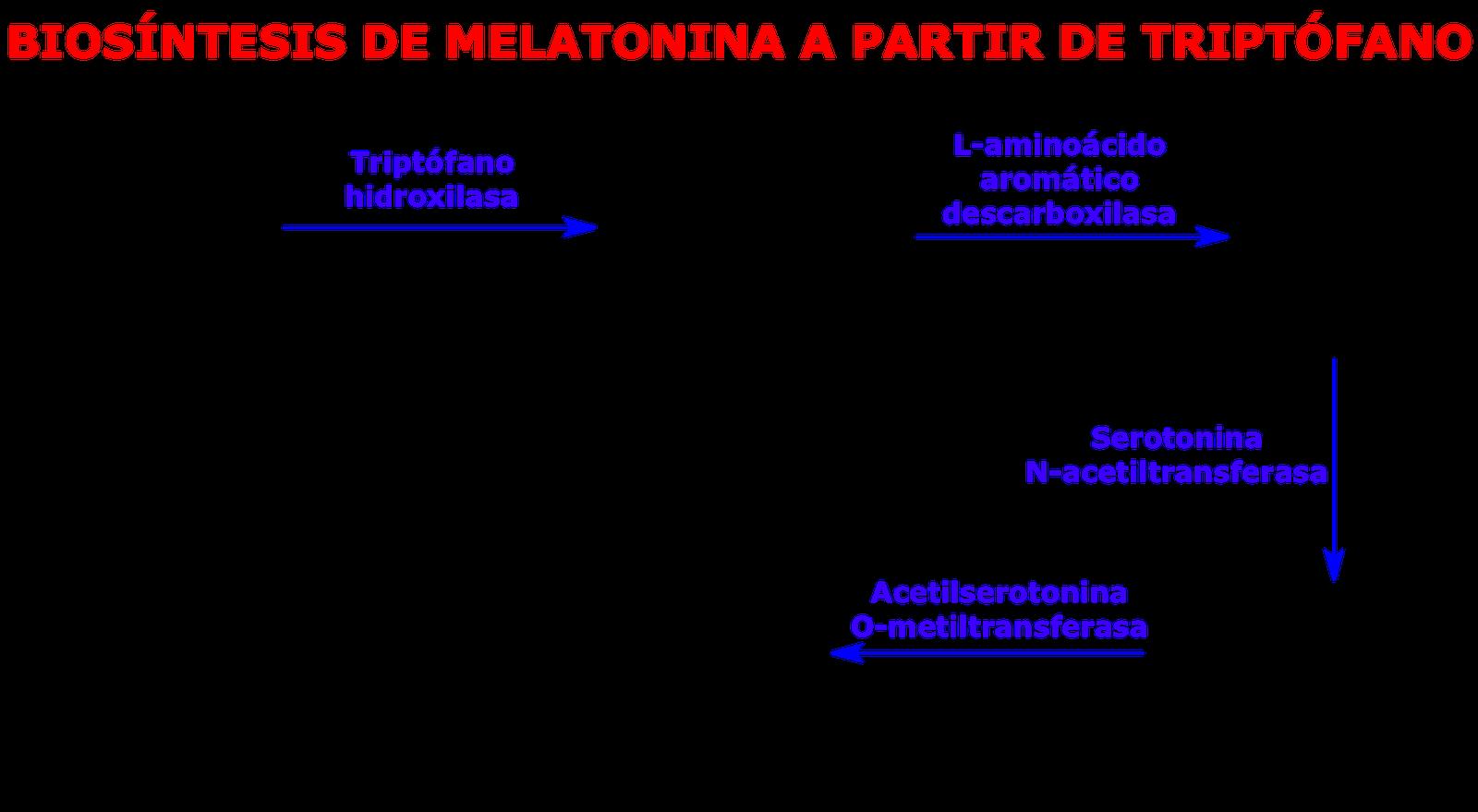Resultado de imagen de triptofano melatonina