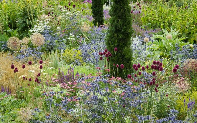 Frontera mixta herbaceas vivaces de flor Allium sphaerocephalon, Eryngium x zabelii, Stachys bizantina y Achillea millefolium 'Cerise Queen' bordura mixta en Broughton Grange.