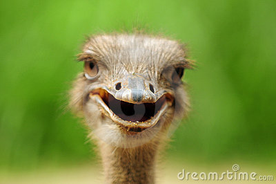 Sweet Cute Baby Girl Wallpaper Very Sweet And Cute Animals Funny Ostrich Photos
