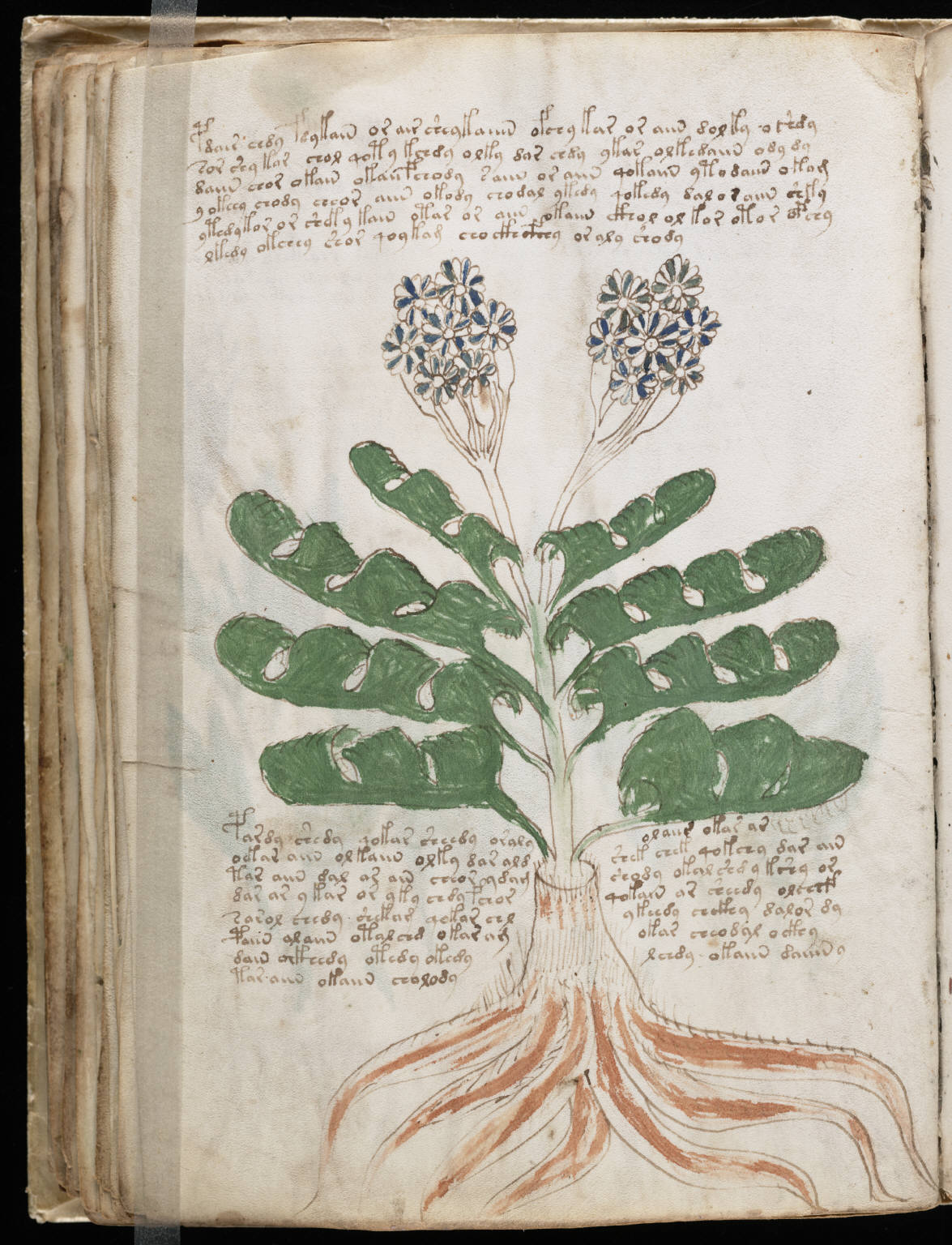 manuscrito076