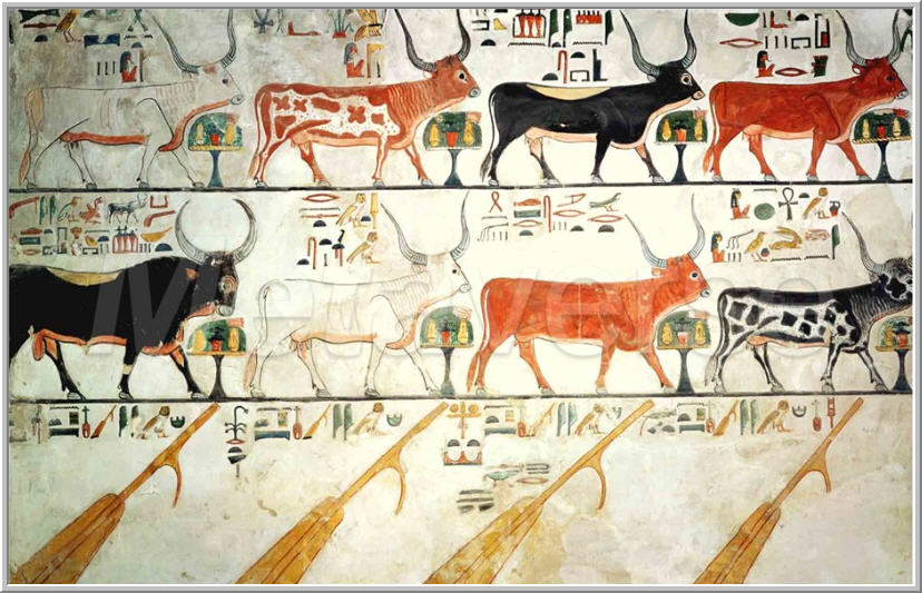 ef05df86 The seven celestial cows and one sacred bull, painted limestone relief in  the tomb of Nefertari, chief royal wife of Ramesses II from her tomb in the  Valley ...