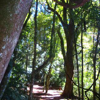 Trilha até O Pinheiro Multissecular, em Nova Petrópolis