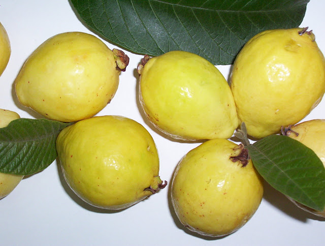 Top 10 healthy reasons to eat guavas this season!