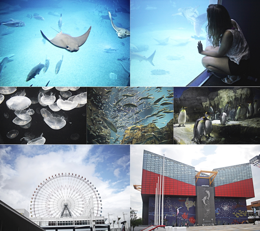 osaka aquarium world records