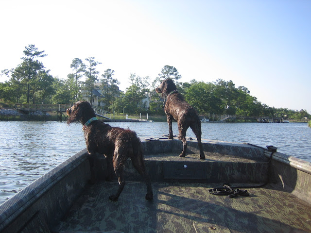 Boykin Spaniels on the boat | The Lowcountry Lady