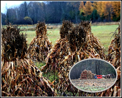 November 2, 2018 Watching our Amish neighbours making corn stooks