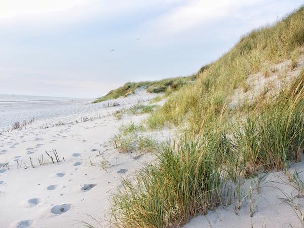 Sylt, l'île merveilleuse de la mer des Wadden