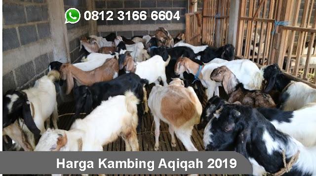 Harga Kambing 2019 Surabaya, Sidoarjo, Gresik dan Seluruh Jawa Timur
