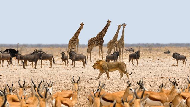 Jenis Fotografi Wildlife yang Cocok untuk Petualang
