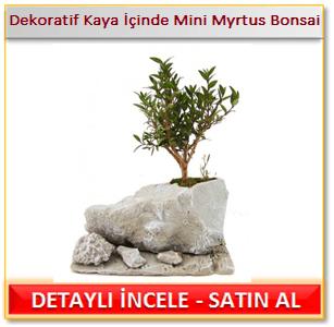 Dekoratif Kaya İçinde Mini Myrtus Bonsai