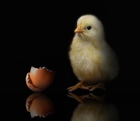 Perdebatan Ayam dulu atau telur dulu?