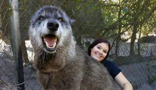 Το γιγαντιαίο λυκόσκυλο με τη συγκλονιστική ιστορία