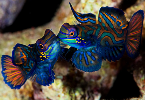 Unduh 640 Gambar Ikan Laut Yang Cantik HD Terbaru