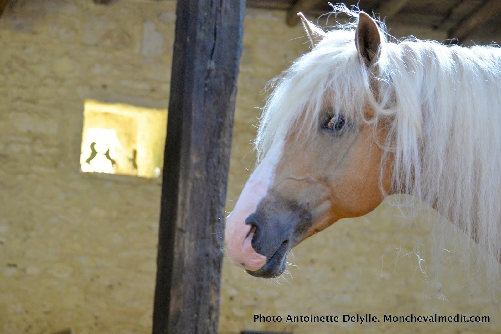 Mon cheval me dit le cheval rebelle peint par liska - Cheval rebelle ...