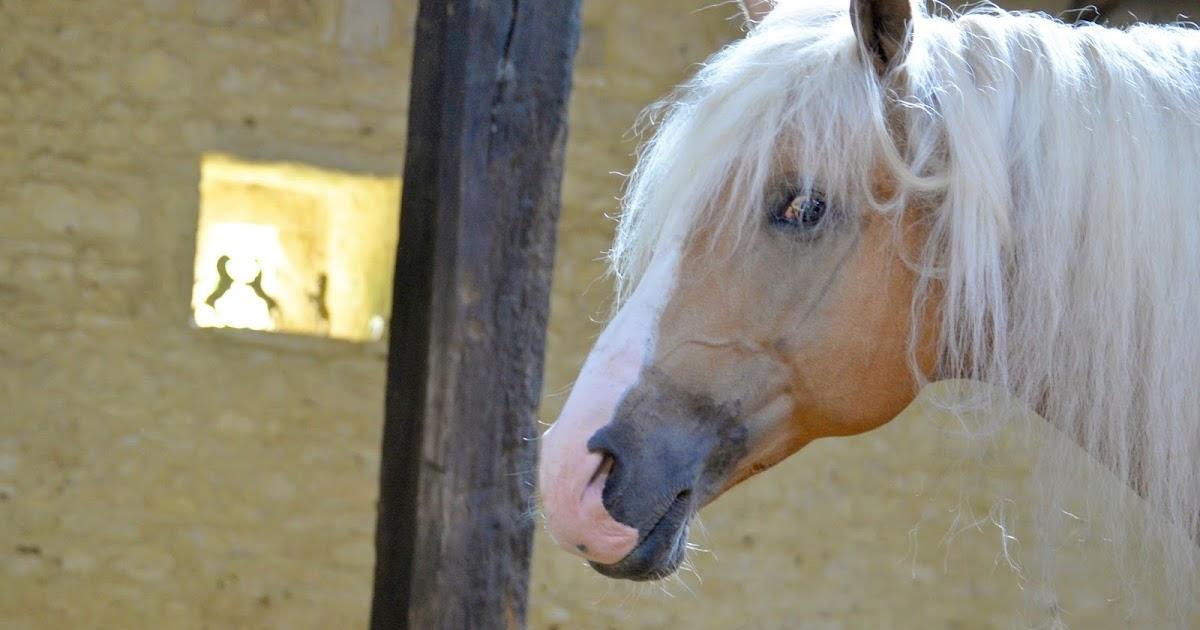 Mon cheval me dit le cheval rebelle peint par liska llorca au festival des arts equestres - Cheval de rebelle ...
