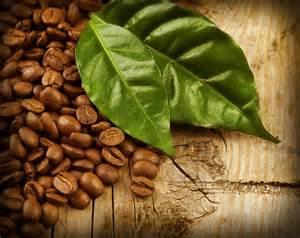 Come si lavora il caffè?