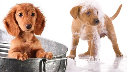 bon plan toilettage canin brive la gaillarde woof mag 39 le blog des chiens heureux. Black Bedroom Furniture Sets. Home Design Ideas