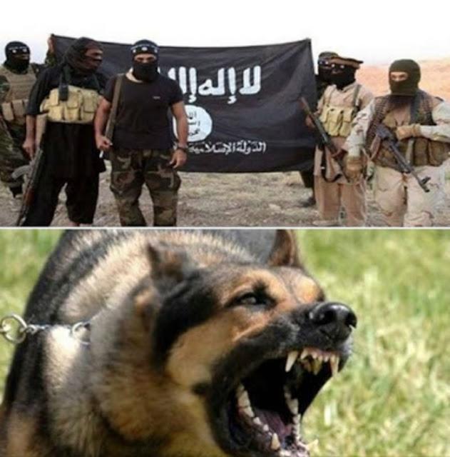 ما هو الذي يقدم طعام لكلاب داعش؟ لا حول ولا قوة الا بالله عندما ستعرف ستصاب بالدهشه.