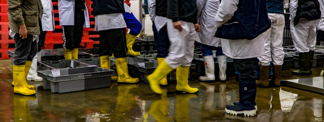 Through the gaps newlyn fishing news wednesday in for Commercial fishing boots