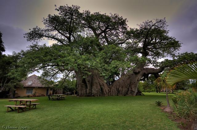 Sunland Pub Sud Africa
