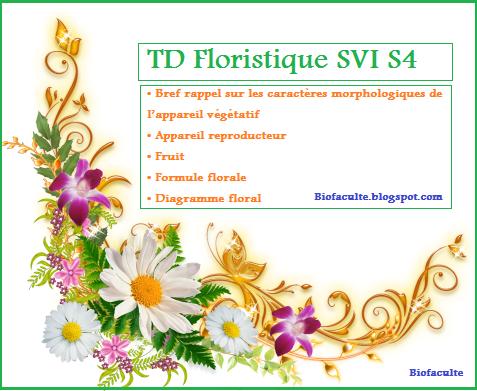 TD et Exercices Floristique