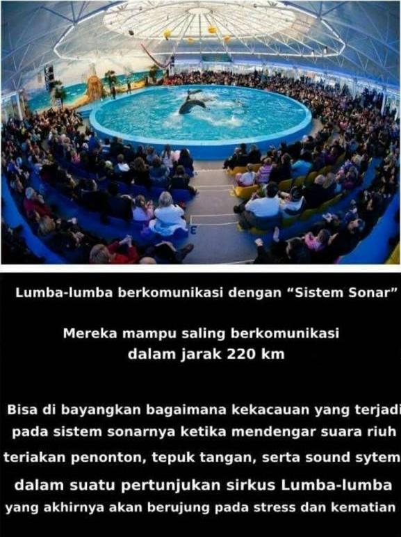Hal yang Mengerikan di balik sirkus lumba-lumba