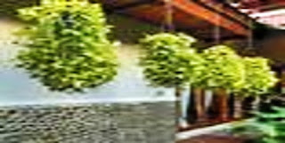 Wajib Tahu!! 4 Solusi Jitu Menghijaukan Rumah di Lahan Minimalis
