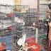 Penjaga Kucing Belanja RM85K Sebulan