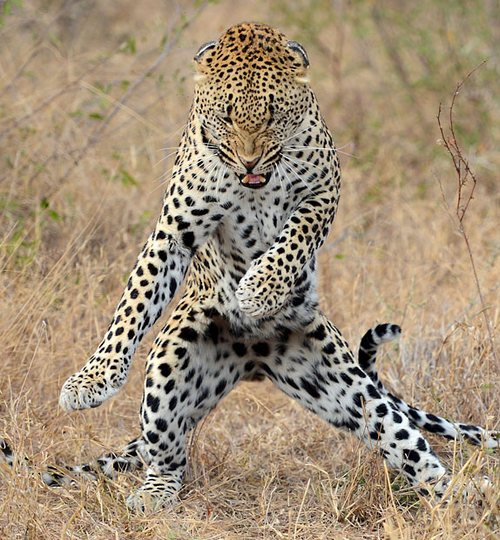 Top 9 animal gangnam style animals ~ Just To Entertain You