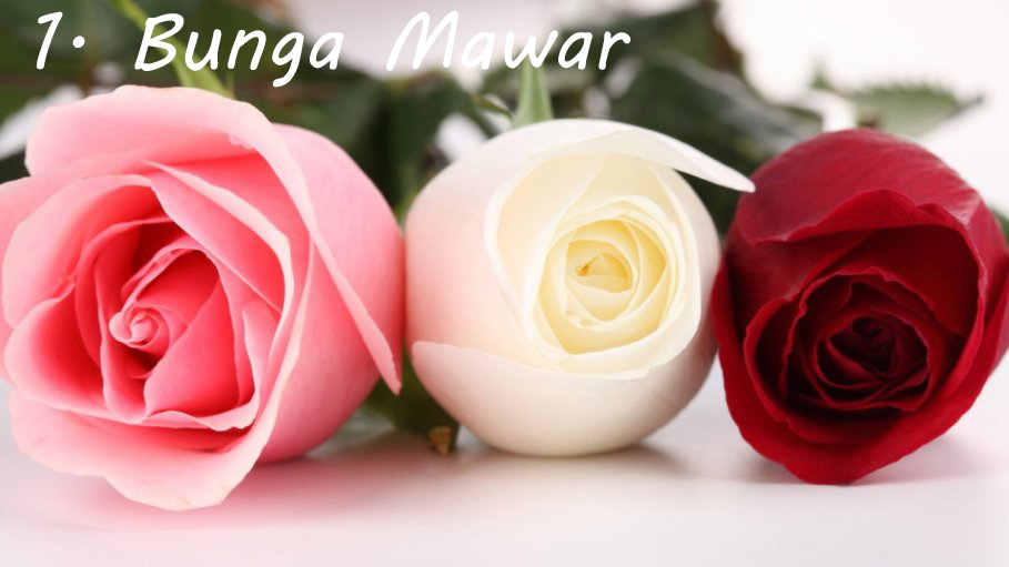 5 Makna Bunga dari Jenis dan Warnanya - Portal Informasi ...