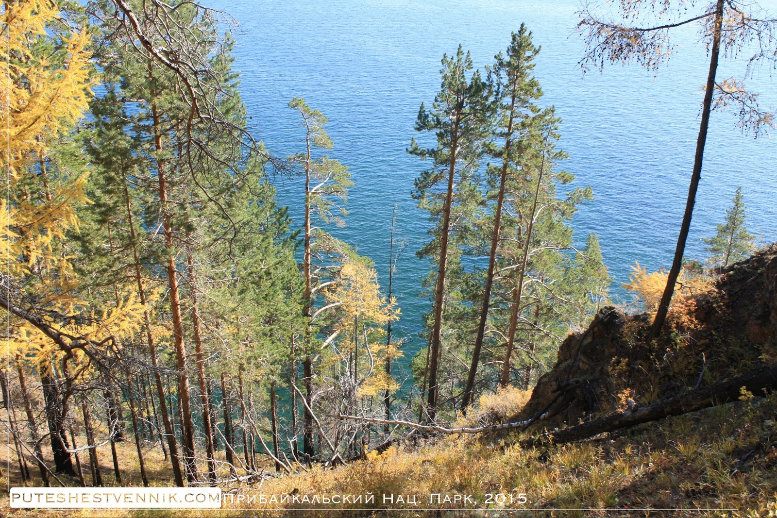 Сосны на склоне и озеро Байкал
