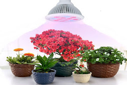 Best Light for Growing Plants Indoors