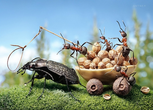 00-Andrey-Pavlov-Photographs-of-Ants-an-Affordable-Journey-to-a-Parallel-World