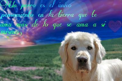 buenos dias perro, imagen de perritos, imagenes de amor de perritos, buenas noches perro, imagenes de perros bonitos