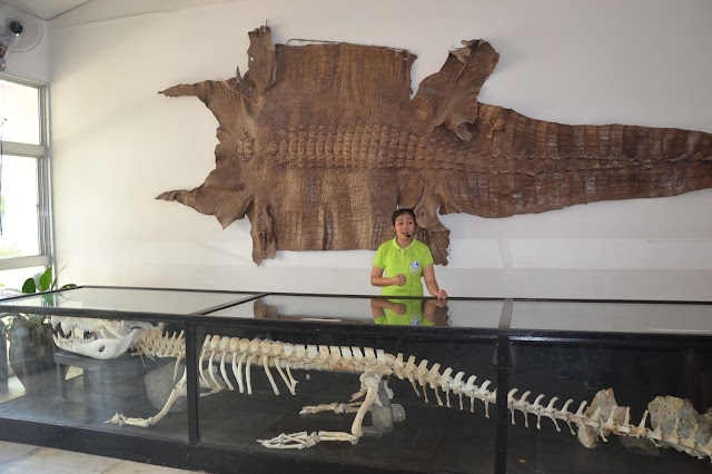 Giant Crocodile Palawan