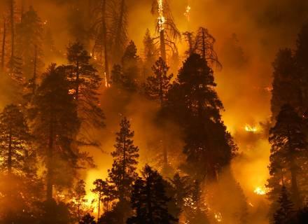 Queimadas e Destruição Ambiental