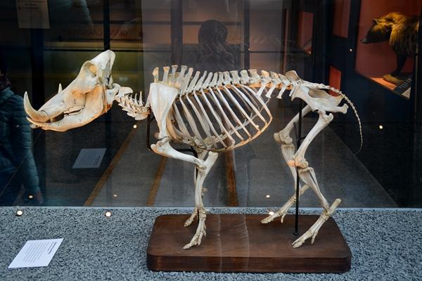 viele skelette