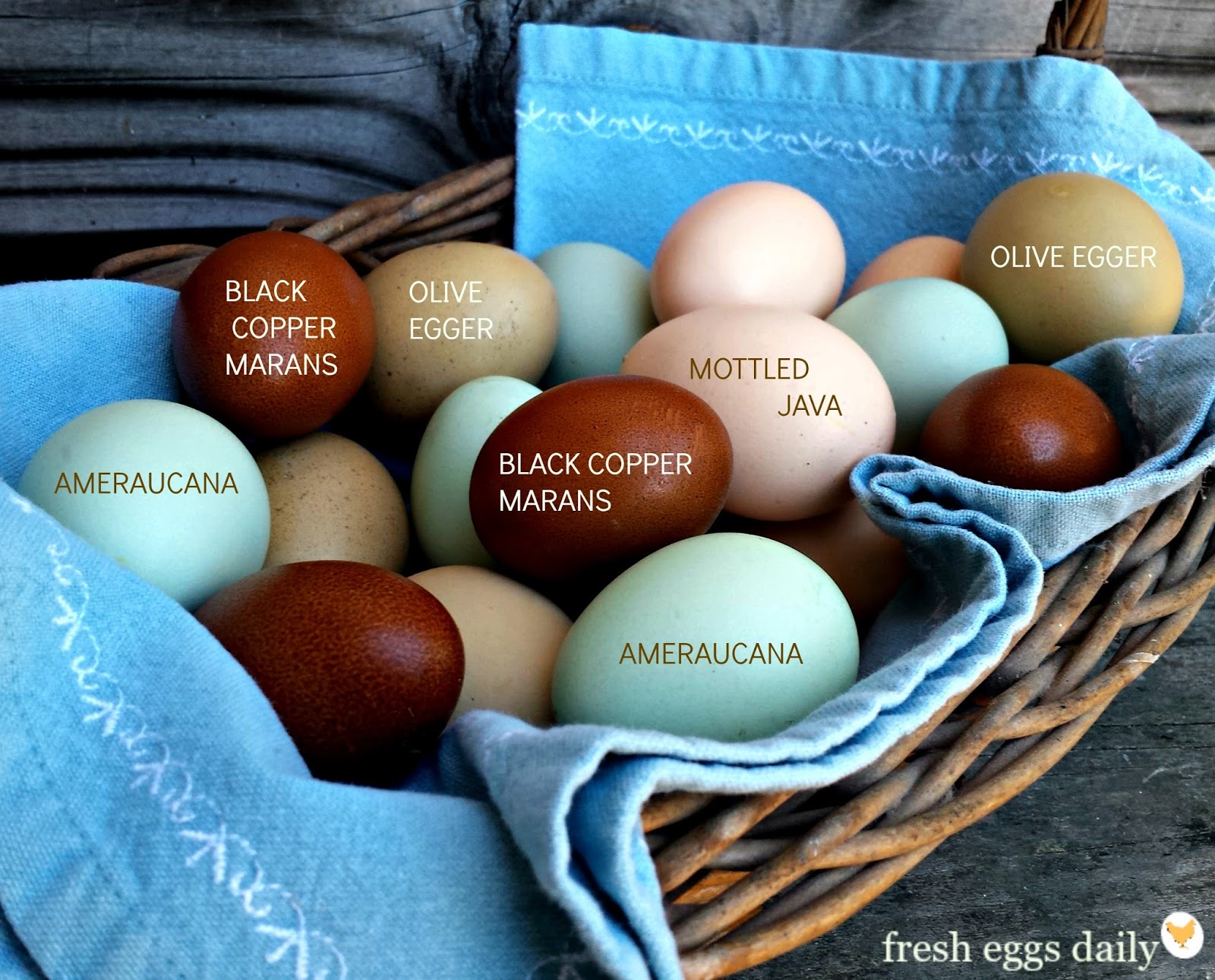 Which Breeds Of Chickens Lay Colored Eggs Fresh Eggs Daily