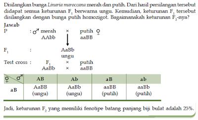 4 Macam Bentuk Penyimpangan Semu Hukum Mendel Dalam Proses Interaksi Gen